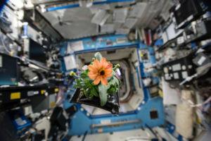 La fleur de l'espace de Scott Kelly