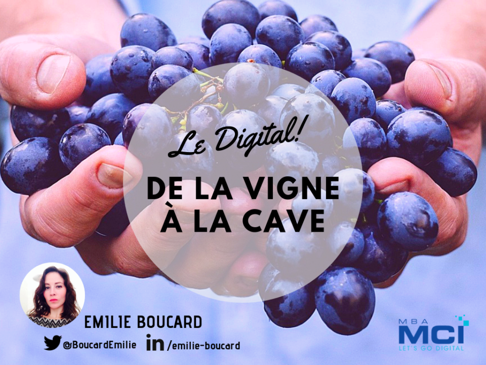 DIGITAL-VIGNE-CAVE